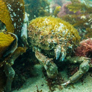 Tumble Dive