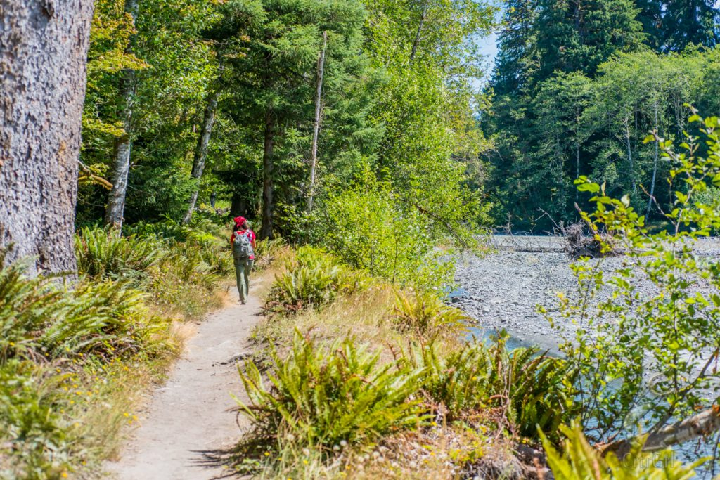 CrtrGrl hiking the Hoh River Trail, Olympic National Park, WA. Photo by Scott McGee at Under Pressure Photography