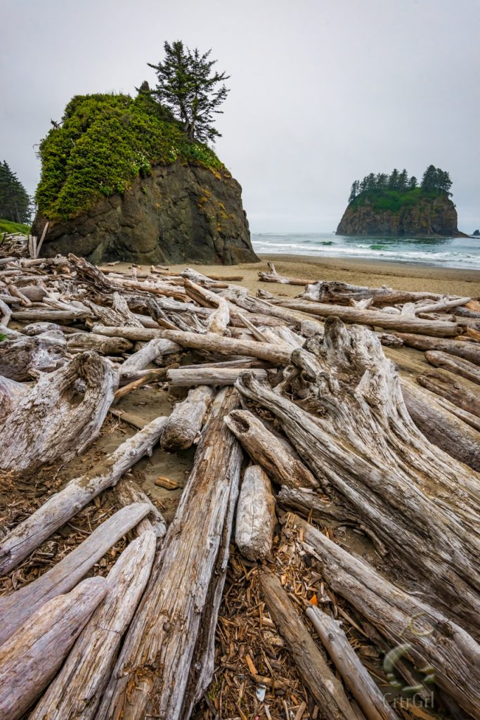 Driftwood leading to the rock island stacks on 2nd Beach, WA. Photo by Scott McGee at Under Pressure Photography