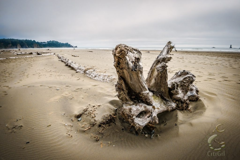 Sand reveals a tree's spinal coluumn at 2nd Beach, WA. Photo by Scott McGee at Under Pressure Photography
