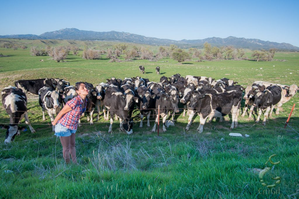 Cruelty Free Living - The relationship I have with cows now is mooing with them <3 Borrego Springs, CA.
