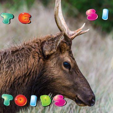 A Sneak Peek At Elk Life
