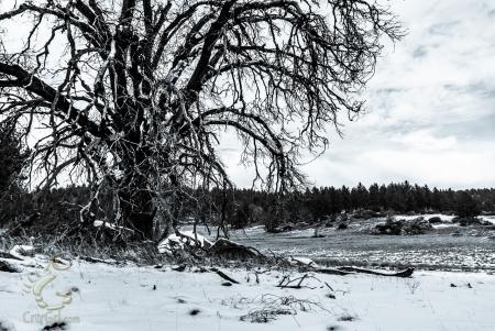 Decaying Winter Dreams