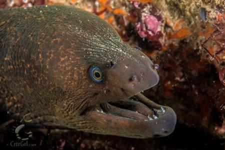 """""""Say, wanna hear a rEEL bad eel joke?...You just did! Ah ha ha...ahem."""""""